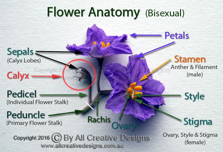 Anatomy of the flower