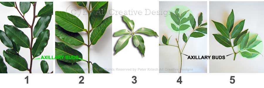 Identify tree species by leaf characteristics