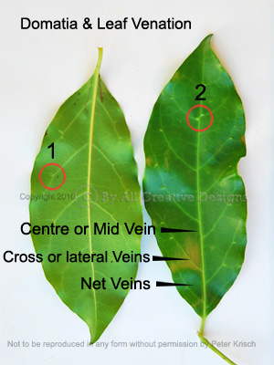 Domatia Leaf Identification