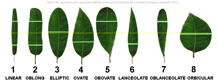 Common Leaf Shapes Australian Tree Images
