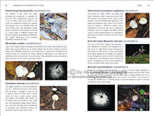 Rainforests of Australia's East Coast Book Sample Page 2
