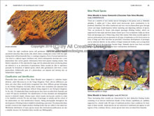 Rainforests of Australia's East Coast        Book Sample Page 4