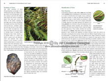 Rainforests of Australia's East Coast        Book Sample Page 5