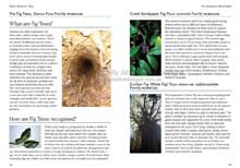 Green Guide Trees Of Australia Book Sample Page 1