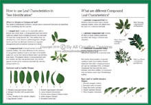 Green Guide Trees Of Australia Book Sample Page 4