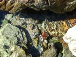 Tidal Rock Pool 1