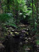 Tributary Mossman River 2