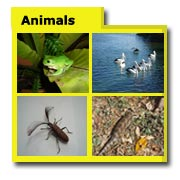 Animal Photos, Animal Images