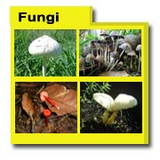 Fungi Photos, Fungi Images