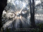 Cool temperate rainforest Light Play