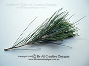 Black She-oak, Allocasuarina littoralis Branchlets