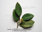 Three-veined Laurel Leaves Cryptocarya triplinervis