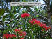 Flower Tree Waratah Alloxylon pinnatum